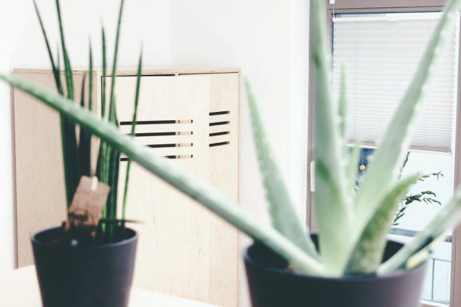 designerschrank und grüne planzen in halle ferienwohnung